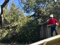 Large Tree Removal - 2