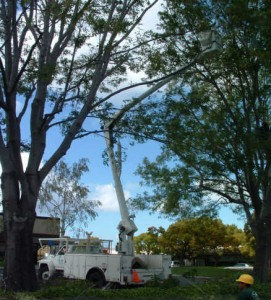 tree service woodside ca