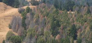 drought care redwood city
