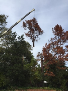 tree removal redwood city ca