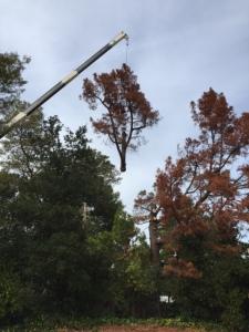 tree removal redwood city ca