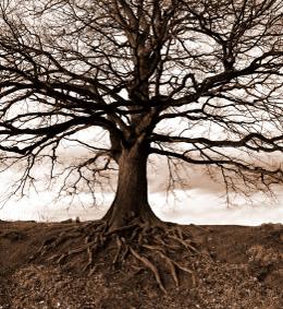 tree service san carlos ca