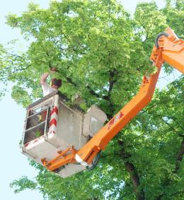 tree service palo alto ca