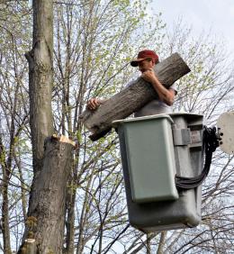 tree service portola valley ca