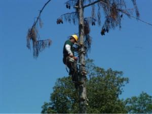 tree service san mateo ca