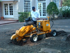 A stump grinder at work.