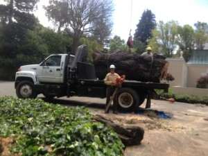 tree service los altos ca
