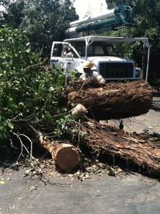 tree service hillsborough ca