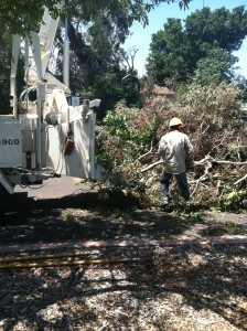 tree service los altos hills ca
