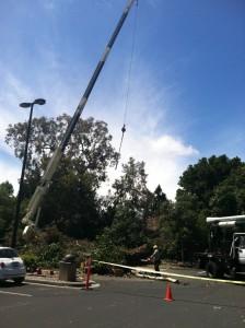 tree service menlo park ca