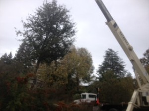 tree service burlingame ca