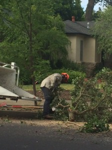 tree service belmont ca
