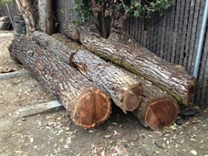 belmont logs for sale