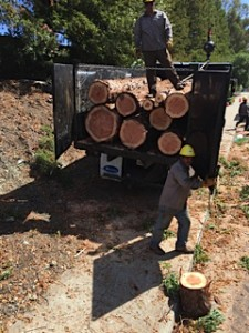 redwood city logs for sale