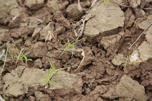 Healthy soil is a deep color.