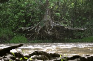 Root system of a tree