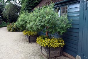 pot landscaping