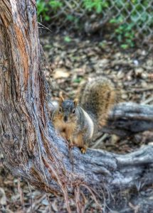 tree hugging squirrel